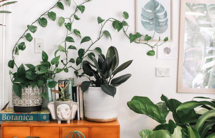【ハンキング・寄せ植え・地植え】家に植物を飾ってみよう;