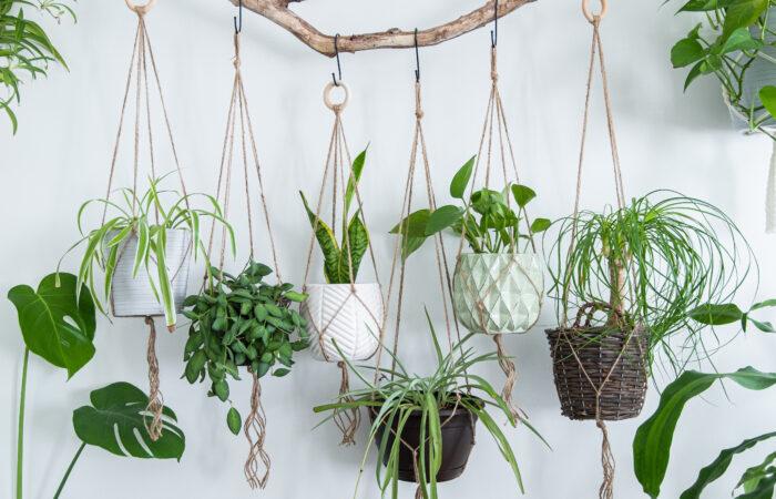 いい運気を呼び寄せる!新築住宅の玄関に観葉植物を飾ってみよう;
